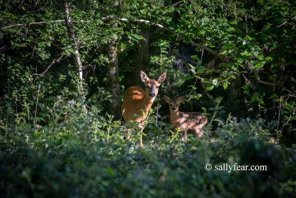 Crown Keepers © Sally Fear