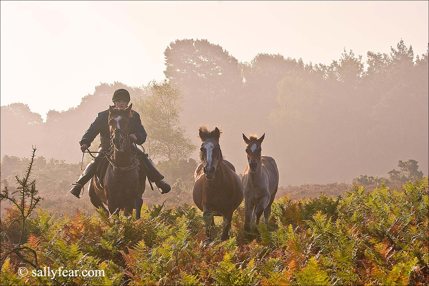 New Forest Pony Drifts © Sally Fear