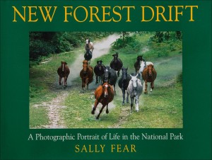 New forest drift by Sally Fear